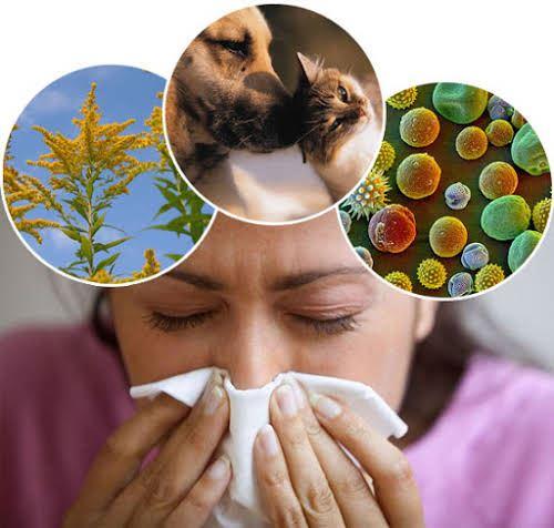Nguy cơ mắc bệnh hen suyễn dị ứng mùa thu và cách phòng ngừa bệnh tái phát - Ảnh 2.