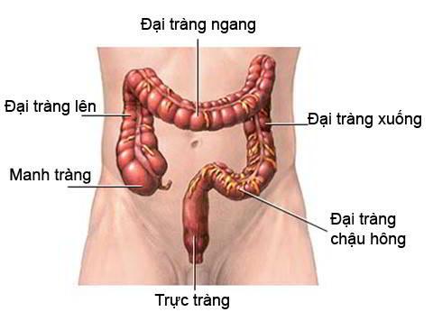 Tổng quan về bệnh ung thư trực tràng - Nguyên nhân, triệu chứng, cách điều trị - Ảnh 8.