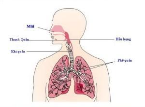 Xây dựng thành công quy trình chẩn đoán ung thư phế quản - Ảnh 1.