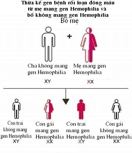 Vì sao bệnh máu khó đông ít xảy ra ở phụ nữ?  - Ảnh 4.