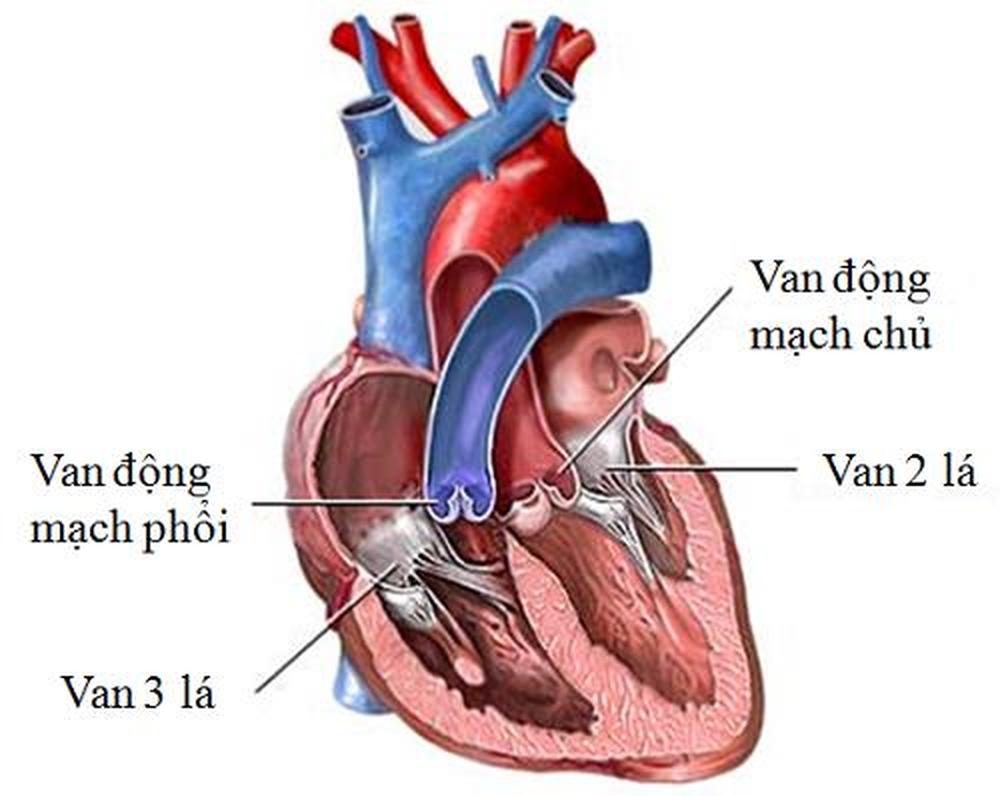 Những nguyên nhân gây bệnh van tim thường gặp - Ảnh 1.