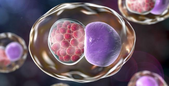Chlamydia ở nam giới là gì và những điều cần biết - Ảnh 2.