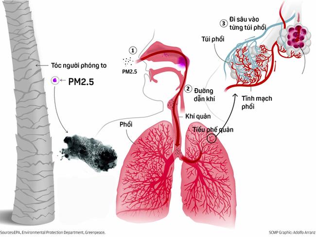 Cảnh báo tác hại sức khỏe từ khói đốt rơm rạ - Ảnh 3.