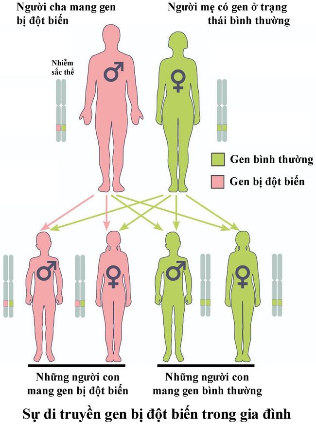 Khoảng 10% bệnh nhân mắc ung thư do di truyền, chuyên gia lý giải như thế nào? - Ảnh 2.