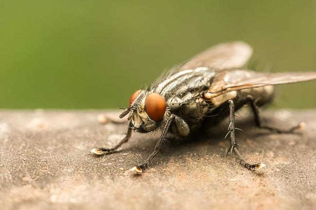 Nguy cơ mắc bệnh lây từ ruồi mùa hè tăng lên, cần phải làm gì? - Ảnh 2.