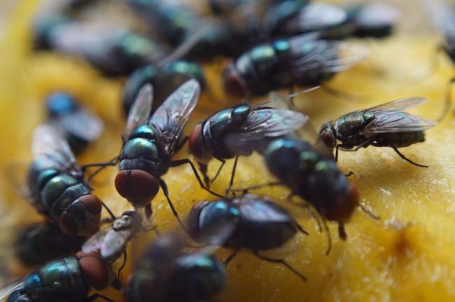 Nguy cơ mắc bệnh lây từ ruồi mùa hè tăng lên, cần phải làm gì? - Ảnh 5.
