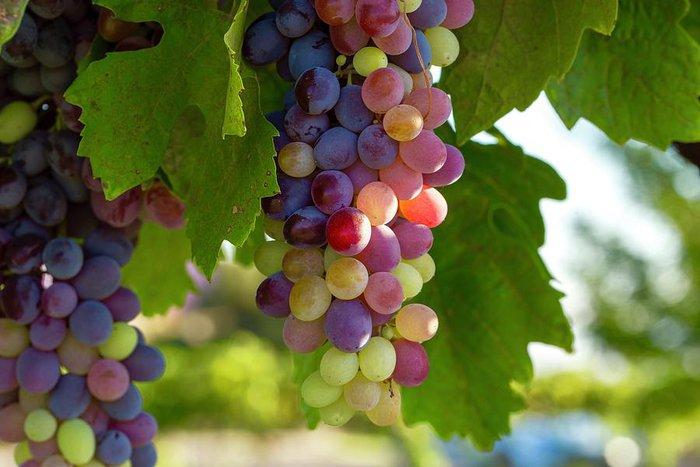 Mùa thu nên ăn quả gì tốt và một số lưu ý cần nhớ khi ăn - Ảnh 8.