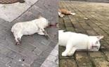 Động vật, thú cưng có thể lây truyền virus Corona được không?