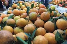 Bảo quản trái cây tươi trong tủ lạnh mà không lo bị hỏng