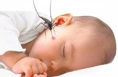 PGS.TS Nguyễn Tiến Dũng: Trẻ em có nguy cơ mắc sốt xuất huyết nặng hơn người lớn