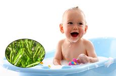 Cỏ mần trầu là cây gì? Dùng cỏ mần trầu tắm cho trẻ có tốt không?