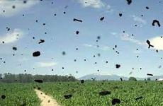 Hiện tượng ruồi bay trước mắt: Thông tin từ A đến Z về hiện tượng này