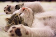 Chia sẻ từ chuyên gia: 5 cách đơn giản giúp bạn đi vào giấc ngủ nhanh hơn và ngon hơn mỗi tối
