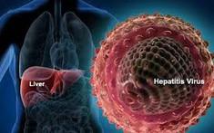 Viêm gan B: Nguyên nhân, dấu hiệu, phân loại và cách điều trị
