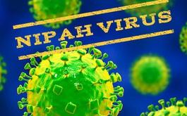 Chuyên gia nói gì về chủng virus Nipah có thể gây chết người gấp 75 lần virus SARS-CoV-2