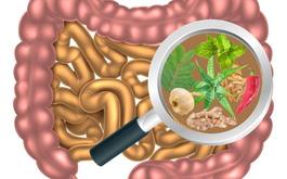 Chuyên gia hướng dẫn cách làm sạch cặn bã trong đường ruột không phải ai cũng biết