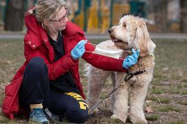 WHO cho biết chưa có bằng chứng cho thấy chó, mèo lây nhiễm Covid-19 cho con người