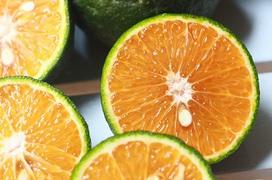 Ăn cam có tác dụng gì? Điểm danh 11 tác dụng của cam đối với sức khỏe