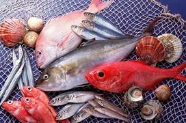 Điểm danh các loại cá biển tốt cho bà bầu