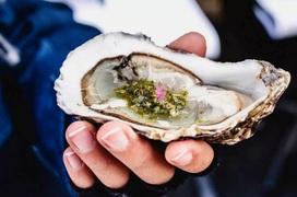 Ăn hàu sống và nguy cơ nhiễm khuẩn nguy hiểm do chế biến sai cách