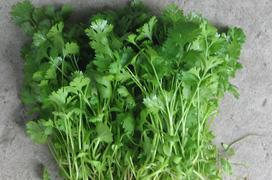 Công dụng của cây rau mùi: Tận dụng từ gốc đến ngọn