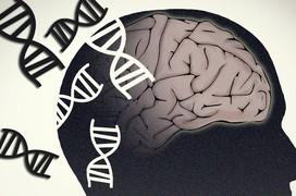 Bệnh Alzheimer có di truyền không?