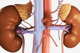 Bệnh viêm thận là gì? Mức độ nguy hiểm của bệnh viêm thận