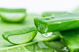 Mách bạn cách chữa viêm da tiết bã bằng thiên nhiên đơn giản, dễ thực hiện lại cực kỳ hiệu quả