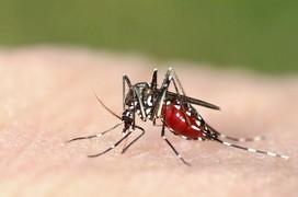 Bệnh sốt xuất huyết dengue và những hiểu lầm tai hại