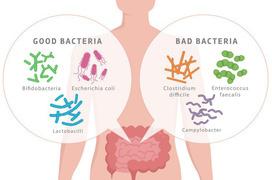 7 vai trò của lợi khuẩn đối với sức khỏe con người