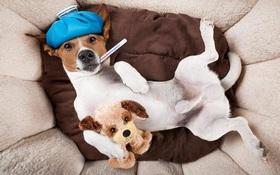 Bệnh cúm chó là gì? Từ A- Z về bệnh cúm chó