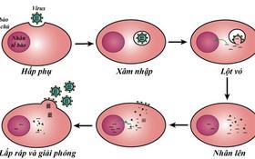 Nắng nóng mùa hè có giết được virus gây bệnh COVID-19 không?
