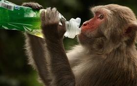 Thí nghiệm vaccine COVID-19 thành công trên khỉ