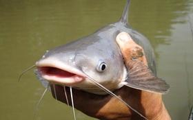 Cá rất tốt nhưng nên tránh ăn 6 loại cá này nếu không muốn bị nhiễm độc