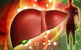 Men gan cao không nên ăn gì? Những thực phẩm nên tránh nếu không muốn bệnh gan tiến triển nặng