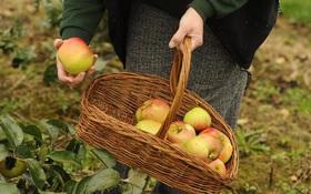 Trái cây vào mùa hè thơm ngon, bổ dưỡng nhưng tiếc của ăn các loại quả này có thể gây ung thư