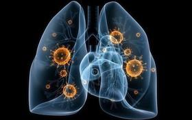 Muốn loại bỏ độc tố khỏi phổi nhưng không biết cách? Đọc ngay!