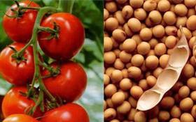 Có thể phòng tránh ung thư tuyến tiền liệt bằng những thực phẩm nào?