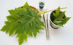 Tìm hiểu về bài thuốc chữa ung thư vú từ cây đu đủ