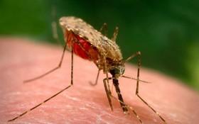 Phân biệt sốt xuất huyết và sốt rét để điều trị đúng cách