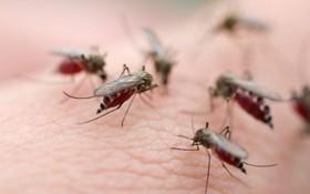 Bệnh lây truyền qua muỗi và các mối nguy hại