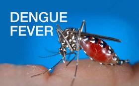 Bệnh sốt xuất huyết và những câu hỏi thường gặp