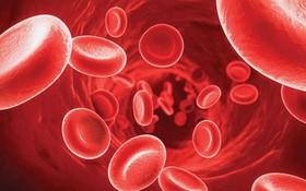 Nguyên nhân gây bệnh máu khó đông và cách điều trị căn bệnh hiếm gặp
