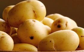 Tìm hiểu 8 công dụng của khoai tây tốt cho sức khỏe