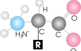 Những acid amin có chứa lưu huỳnh phổ biến