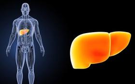 Tổng hợp các cách đối phó với gan nhiễm mỡ độ 1 hiệu quả và an toàn
