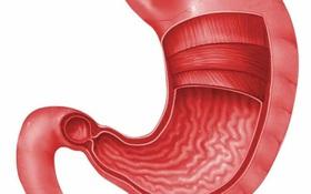 Viêm dạ dày có lây không? Con đường lây nhiễm bệnh như thế nào?