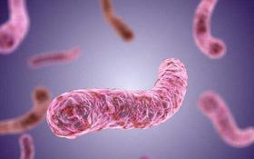 Bệnh lao ngoài phổi là gì? Tìm hiểu về bệnh lao ngoài phổi
