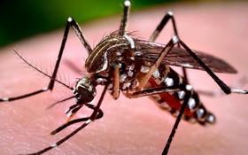 Muỗi đốt bao lâu thì bị sốt xuất huyết? Đặc điểm của muỗi vằn gây bệnh