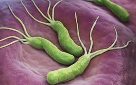 Tìm hiểu về thời gian và môi trường sống của vi khuẩn HP